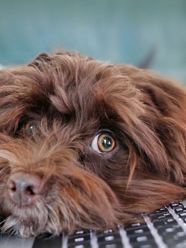 Tipps für den Alltag mit Hund